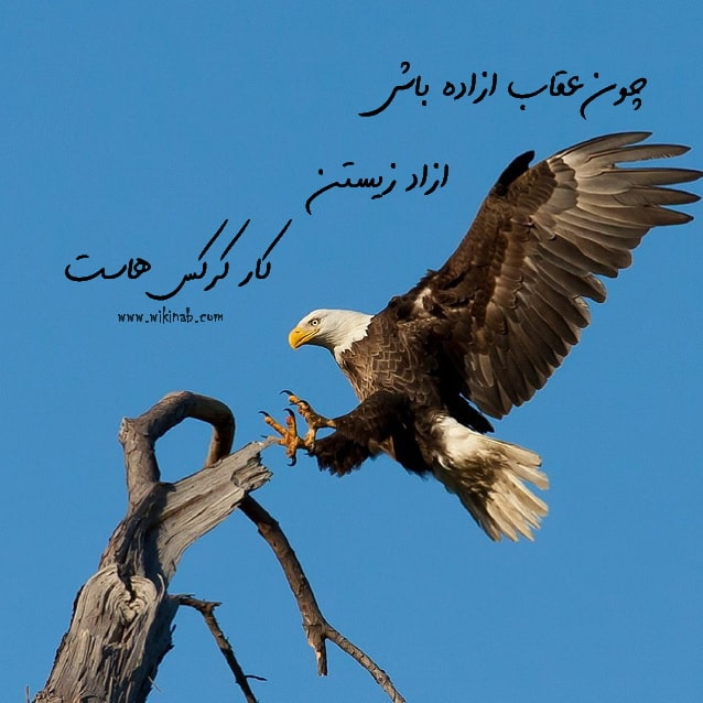 عکس نوشته عقاب