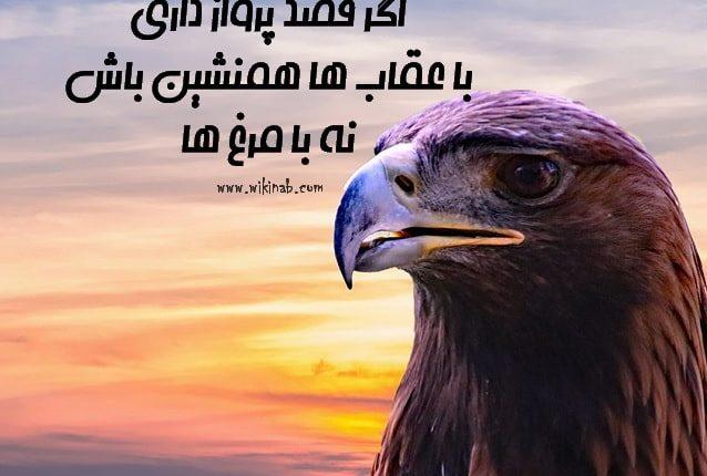 oghab5